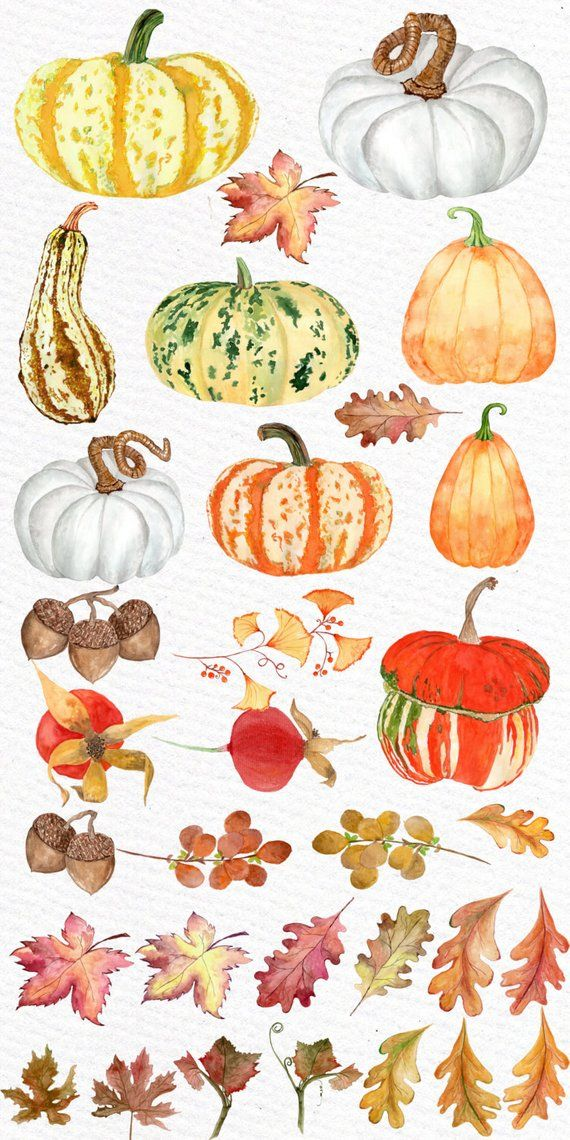 Watercolor pumpkin clipart: \