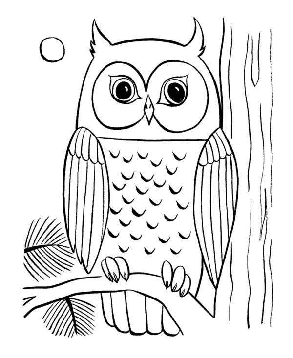 coloring pages of owls to print.