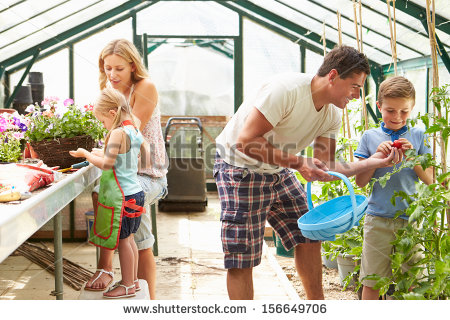 Family Working Together In Greenhouse Stock Photo.