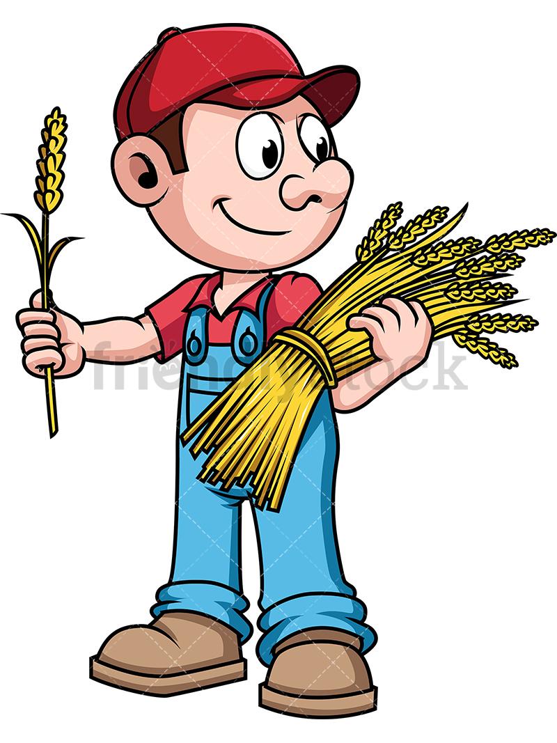 Farmer Harvesting Wheat.