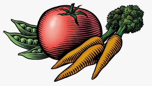 Transparent Carrot Clipart Png.