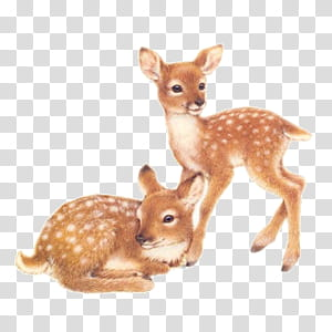 Cute animals s, two brown fawns transparent background PNG.