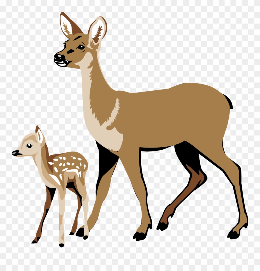 Whitetail Deer Clipart.