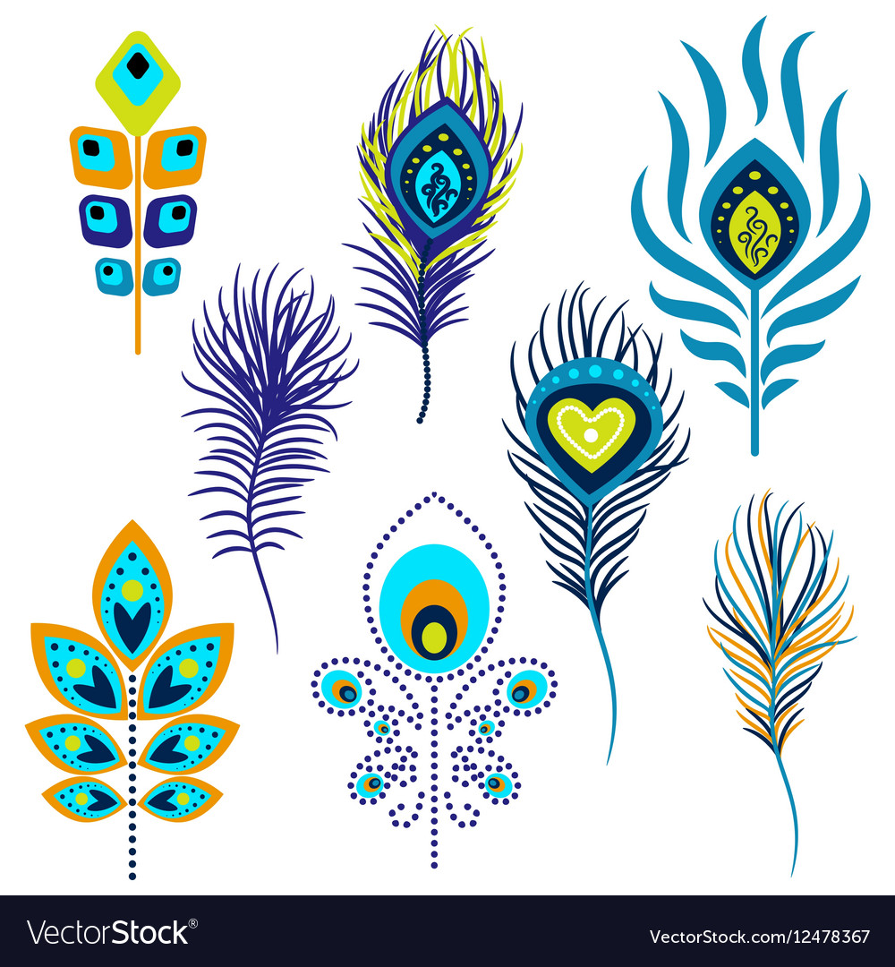 Peacock feathers clipart.