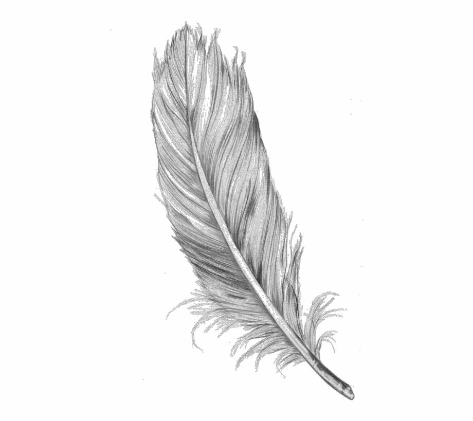 Feather Clipart Tumblr Transparent.