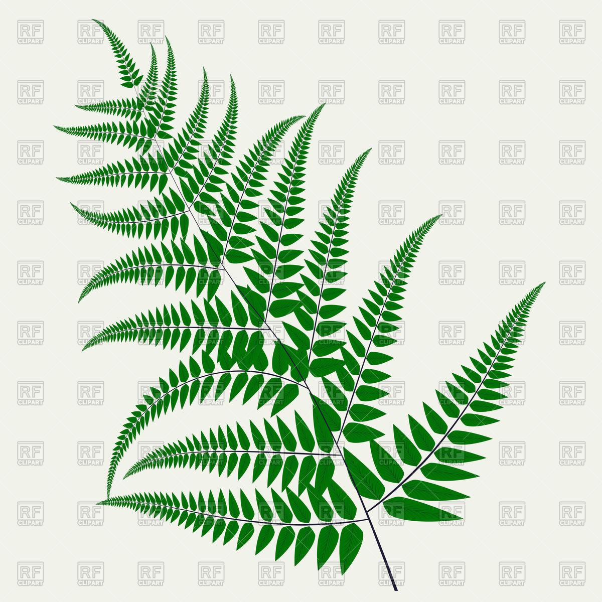 Fern leaf Stock Vector Image.