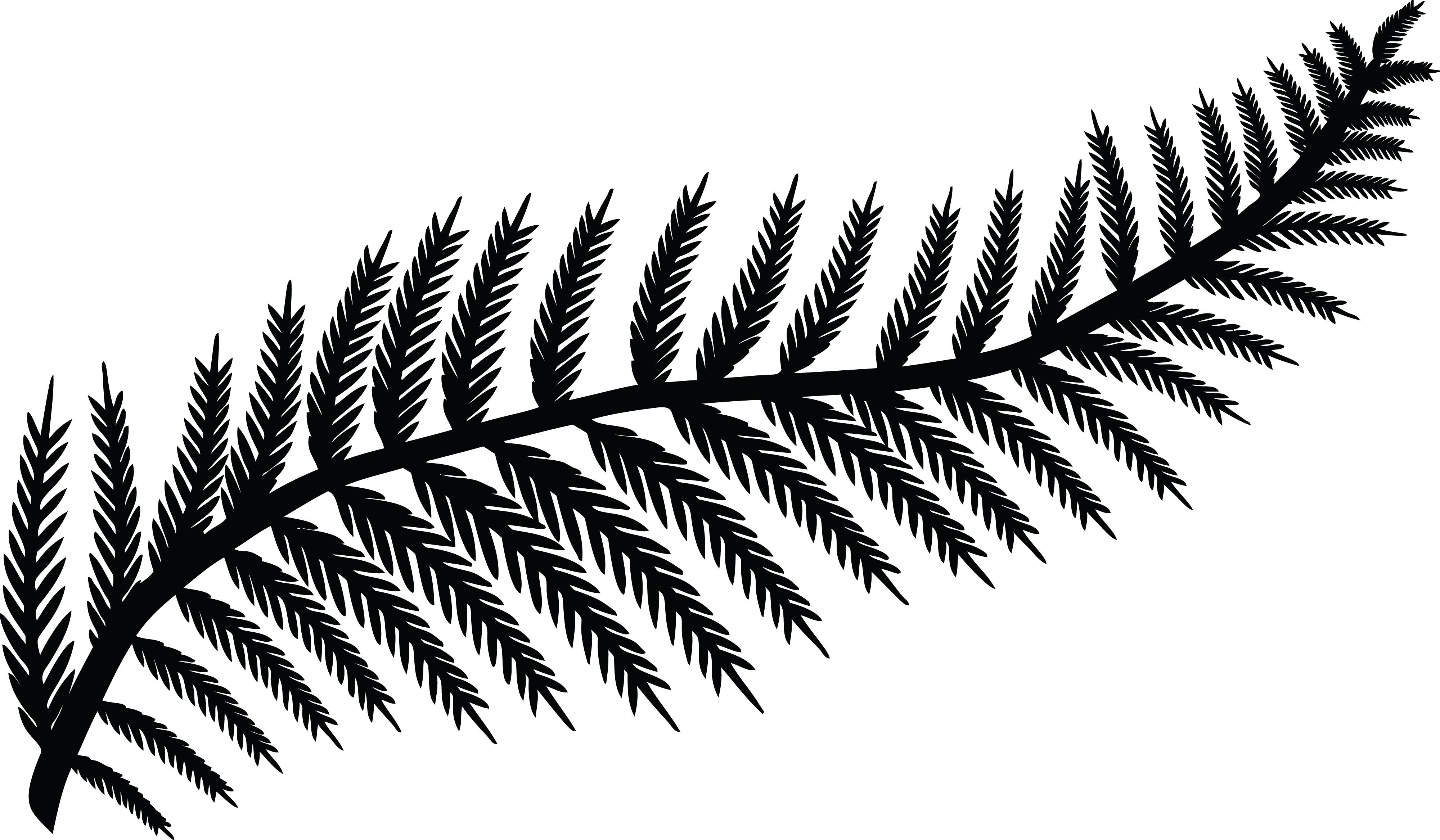 Free Clipart Of A fern leaf.