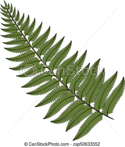 Color image fern leaf. Isolated vector object..