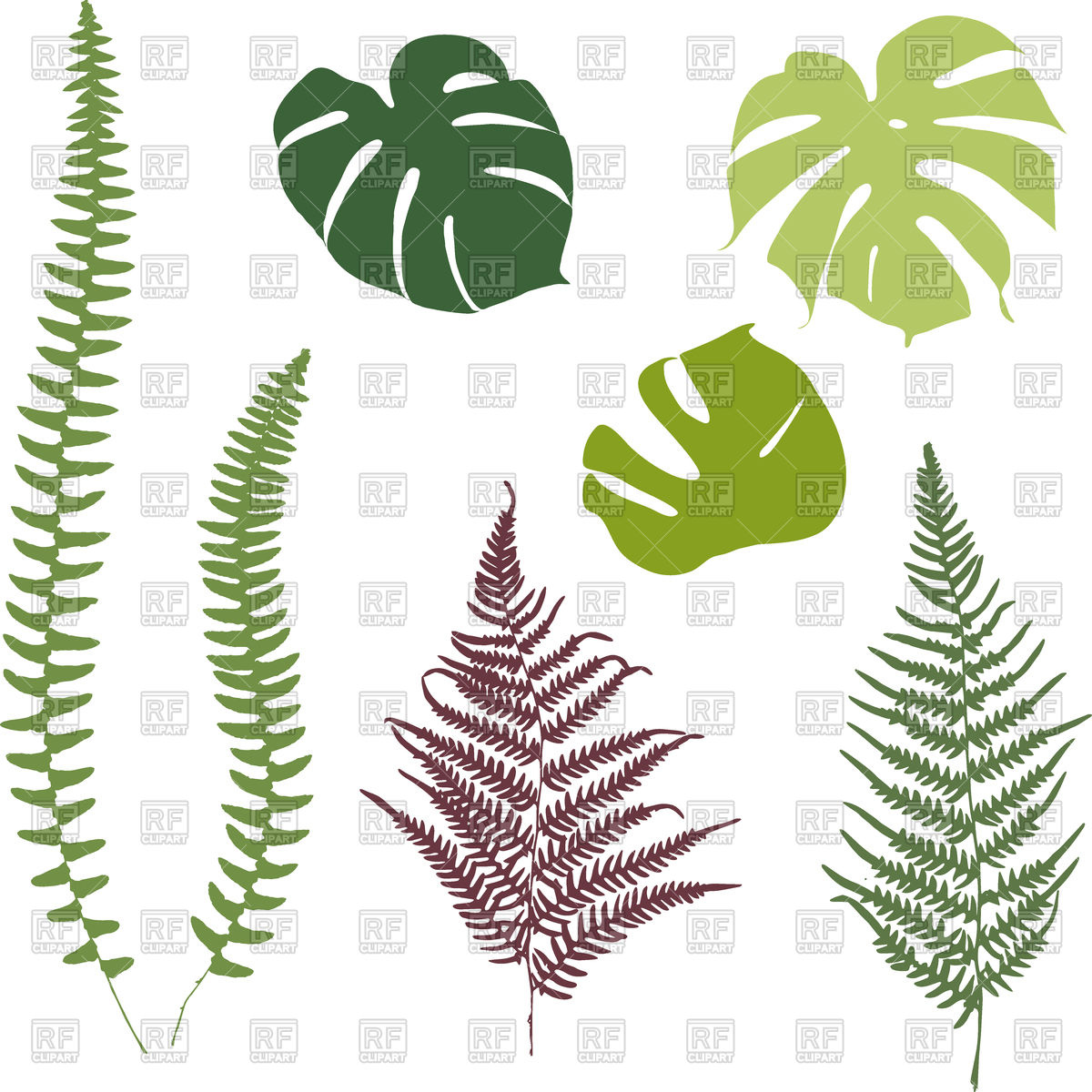 Silhouettes of fern and monsters leaves Stock Vector Image.