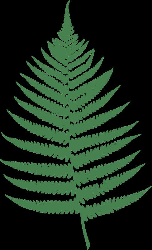 Free Clipart: Fern leaf.