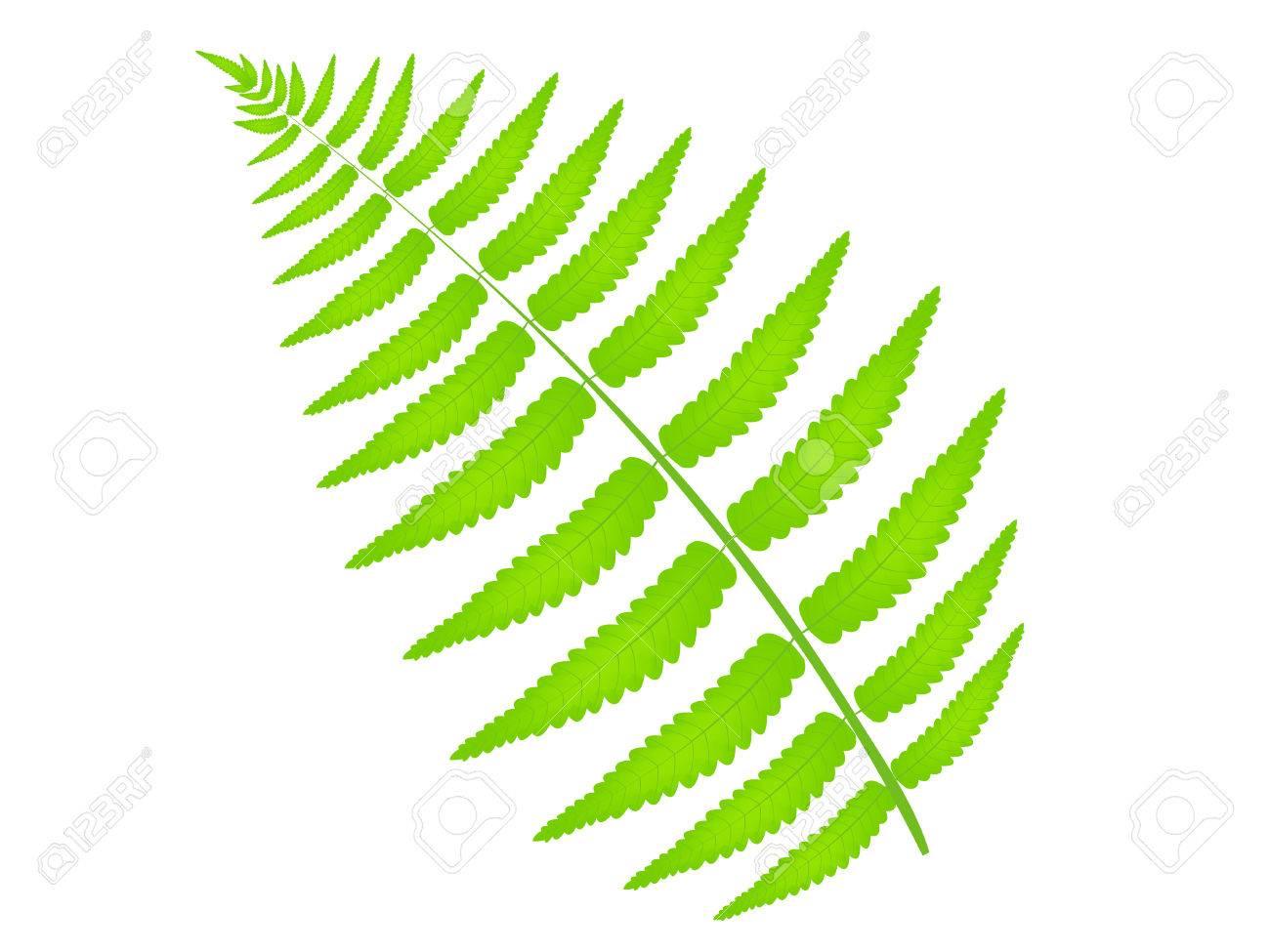 Fern leaf plant.