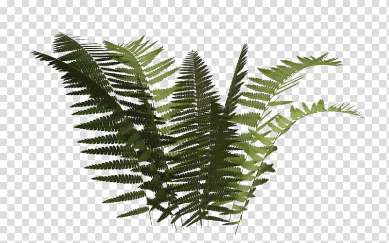 Fern Plant Leaf, fern transparent background PNG clipart.
