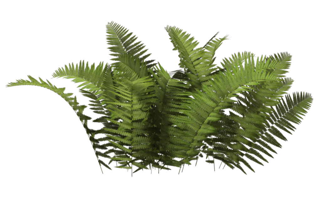 Jungle clipart ferns, Jungle ferns Transparent FREE for.