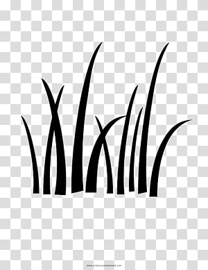 Tall Fescue PNG clipart images free download.
