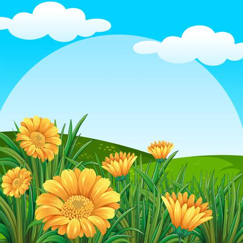 Background scene with yellow flowers in field.