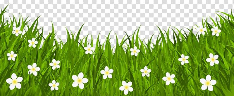 White daisy flower field illustration, Red Easter egg.