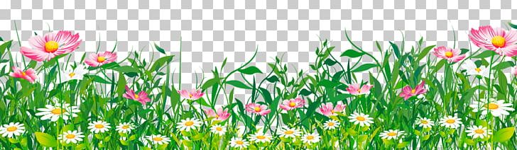 Flower PNG, Clipart, Art, Clipart, Common Daisy, Computer.