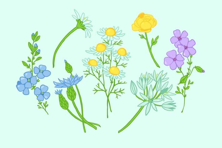 Field Flowers Clipart by Jumsoft on Envato Elements.