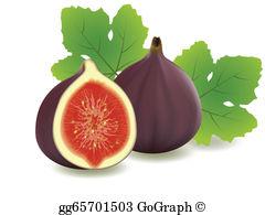 Figs Clip Art.