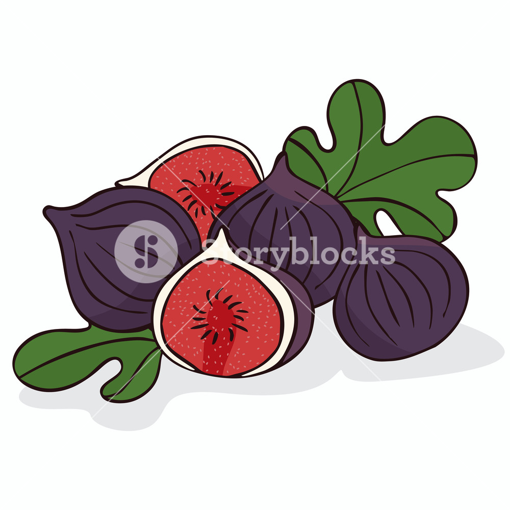 Isolate ripe figs or fig fruits on white background. Close up.