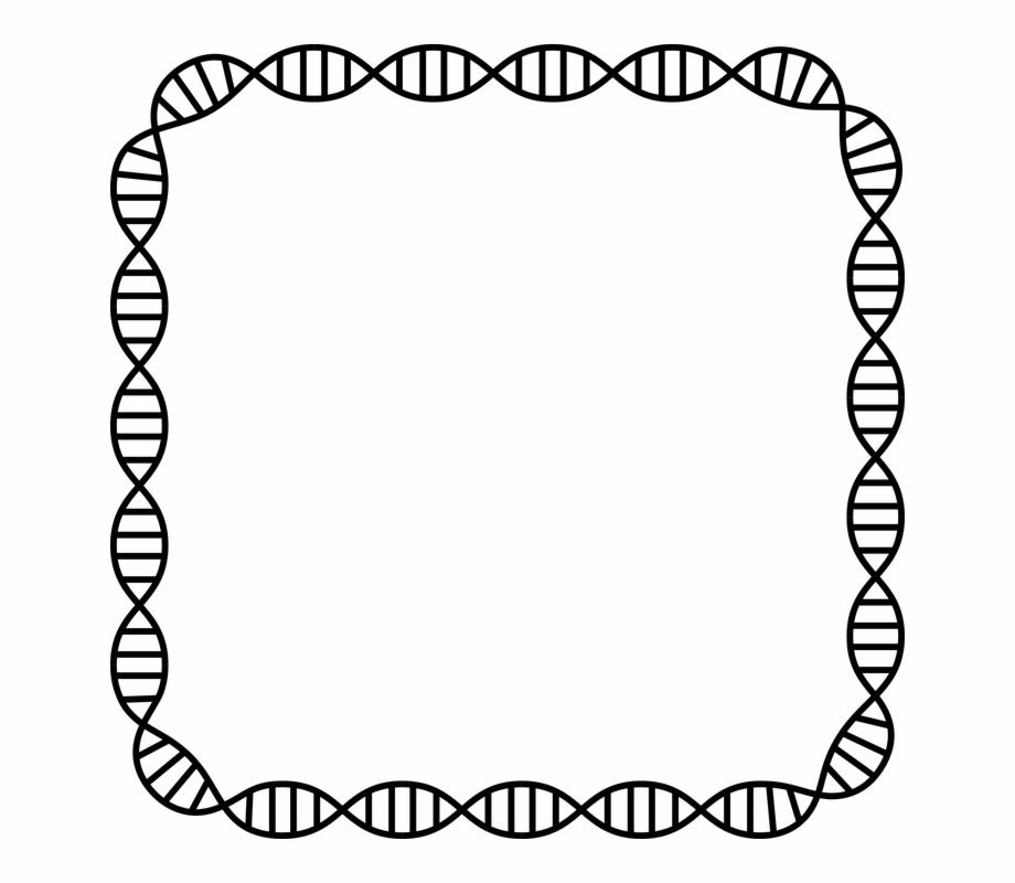 Dna Structure Clipart Dna Border.