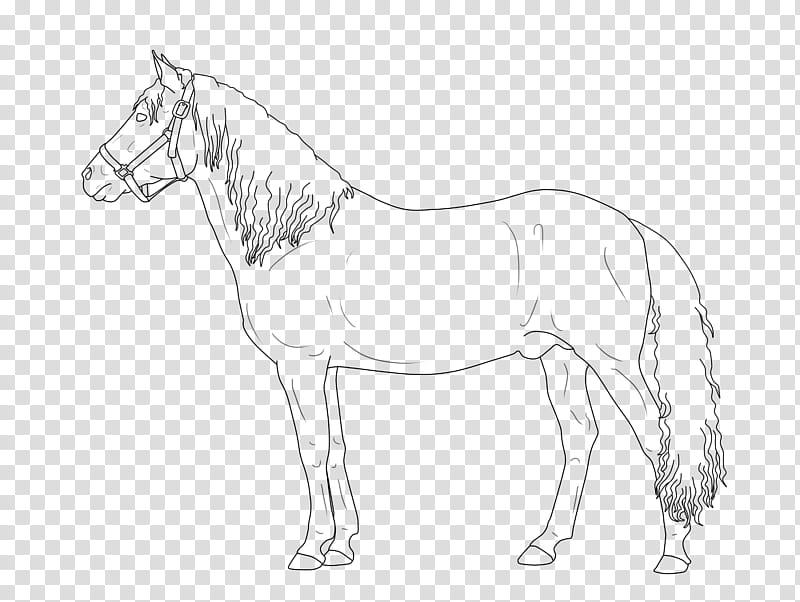 FREE LINEART TO USE Paso Fino Stallion transparent.