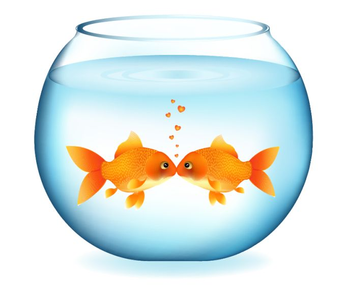 Fish bowl cat and fish in bowl clip art a free graphic from pets 3.