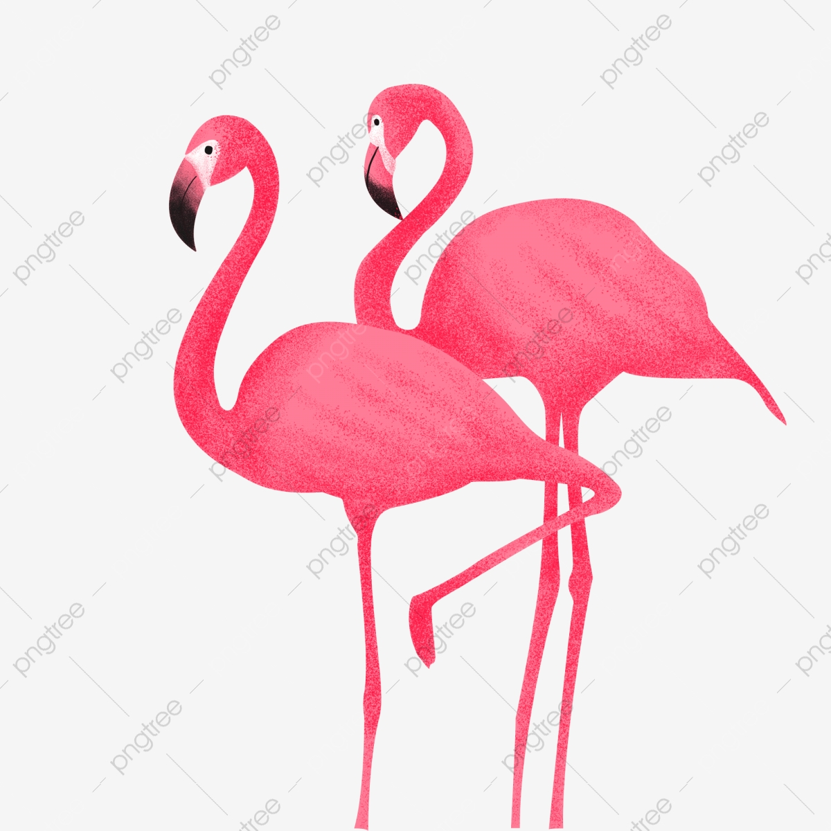 Cartoon Flamingo, Cartoon Clipart, Flamingo Clipart, Cartoon PNG.