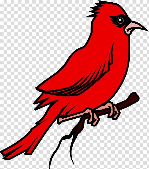 Bird Vocabulary English Learning Flashcard, Bird transparent.