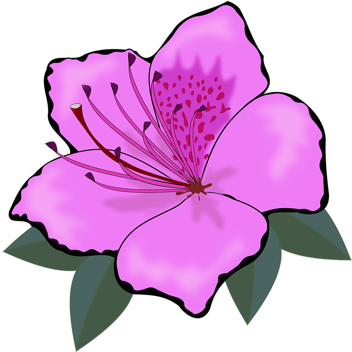 Clipart flor 4 » Clipart Portal.