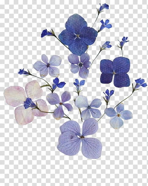 PURPLE AESTHETIC RESOURCES, blue and white flowers.