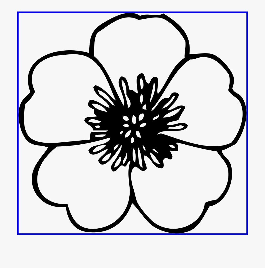 Daisy Black And White Clipart.