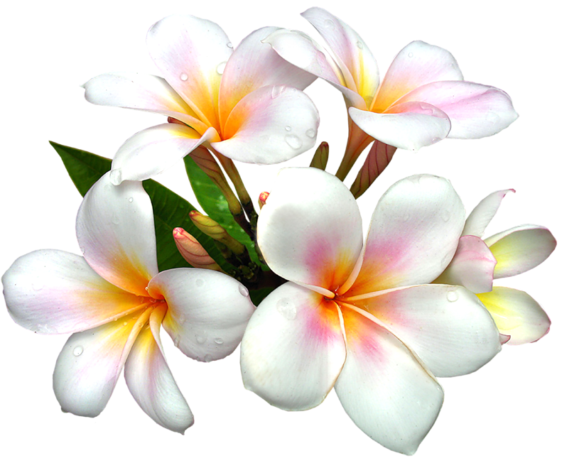 clipart flower png #13