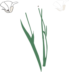 White Long Stem Flower Broke Apart Clip Art at Clker.com.