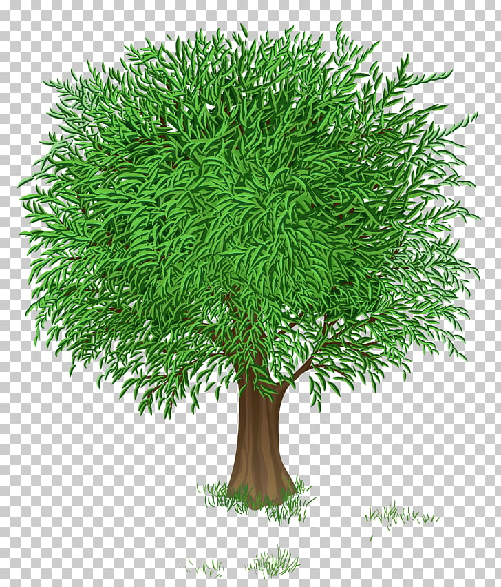 Flower Tree Blossom , Green Tree Transparent , green leafed.