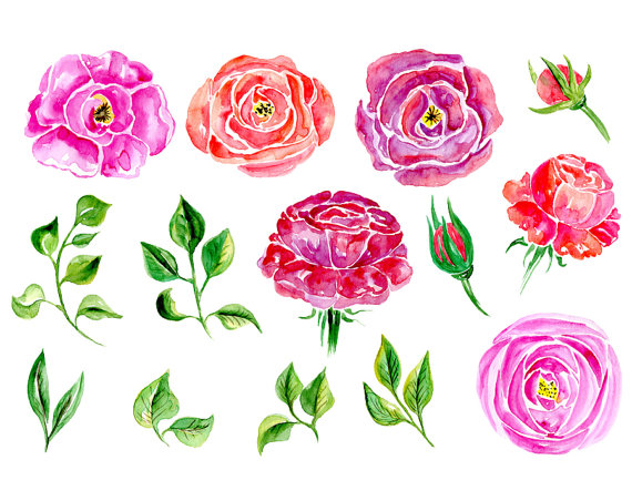 Watercolor flower clipart: 14 purple, red and pink roses, Flowers.