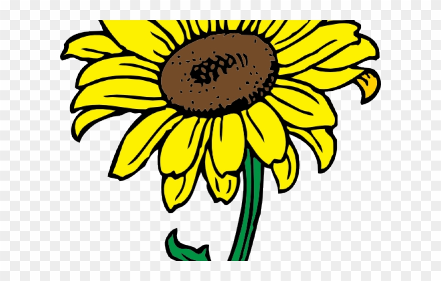 Flowers Color Clipart Sunflower.