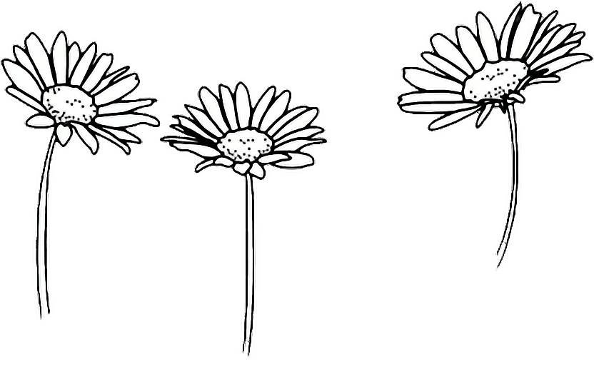 Clip art Drawing Flower Image Floral design.