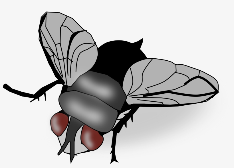 Fly Png Image.