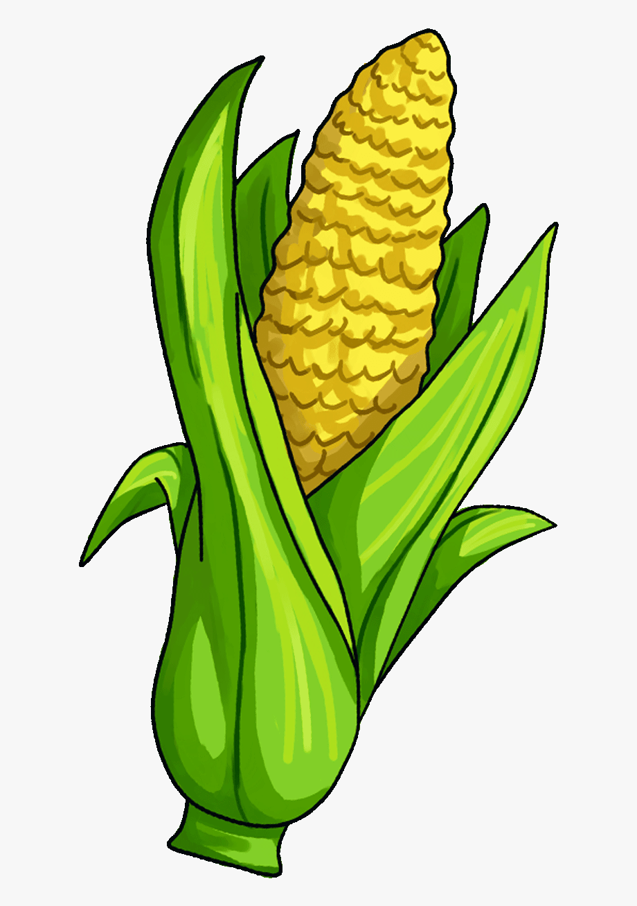 Surprising Corn Clipart For Free Fruit Names A With.