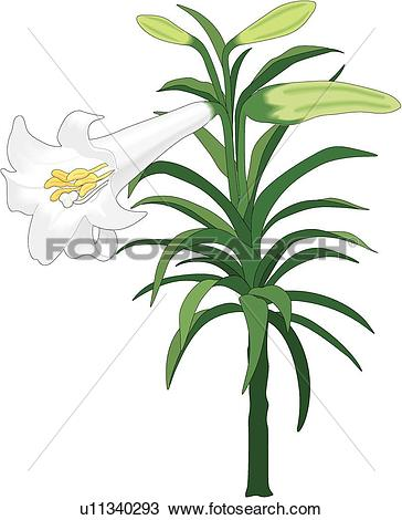 Easter lily Clipart Vector Graphics. 877 easter lily EPS clip art.