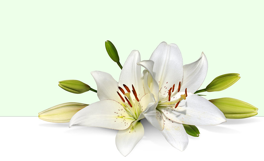 Easter Lily Clip Art.