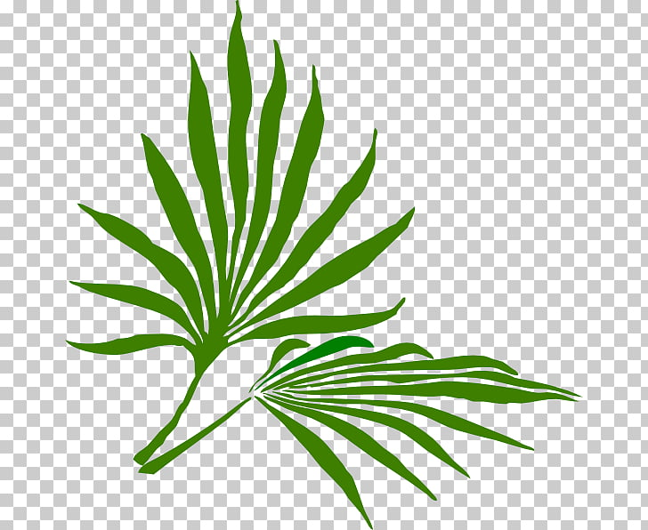 Palm Sunday Palm branch Easter , palm leaf PNG clipart.