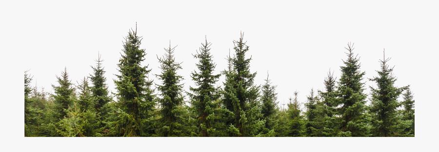 Transparent Trees Png.