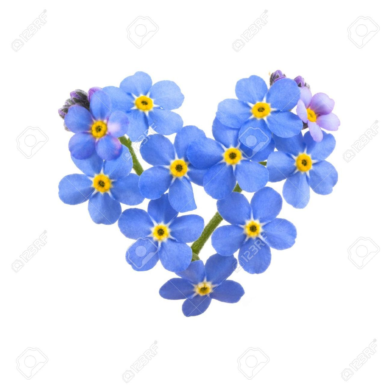 Forget me not clipart 4 » Clipart Station.