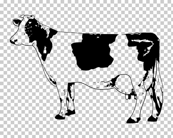 Angus cattle Calf , Sketch Cow, cow illustration PNG clipart.