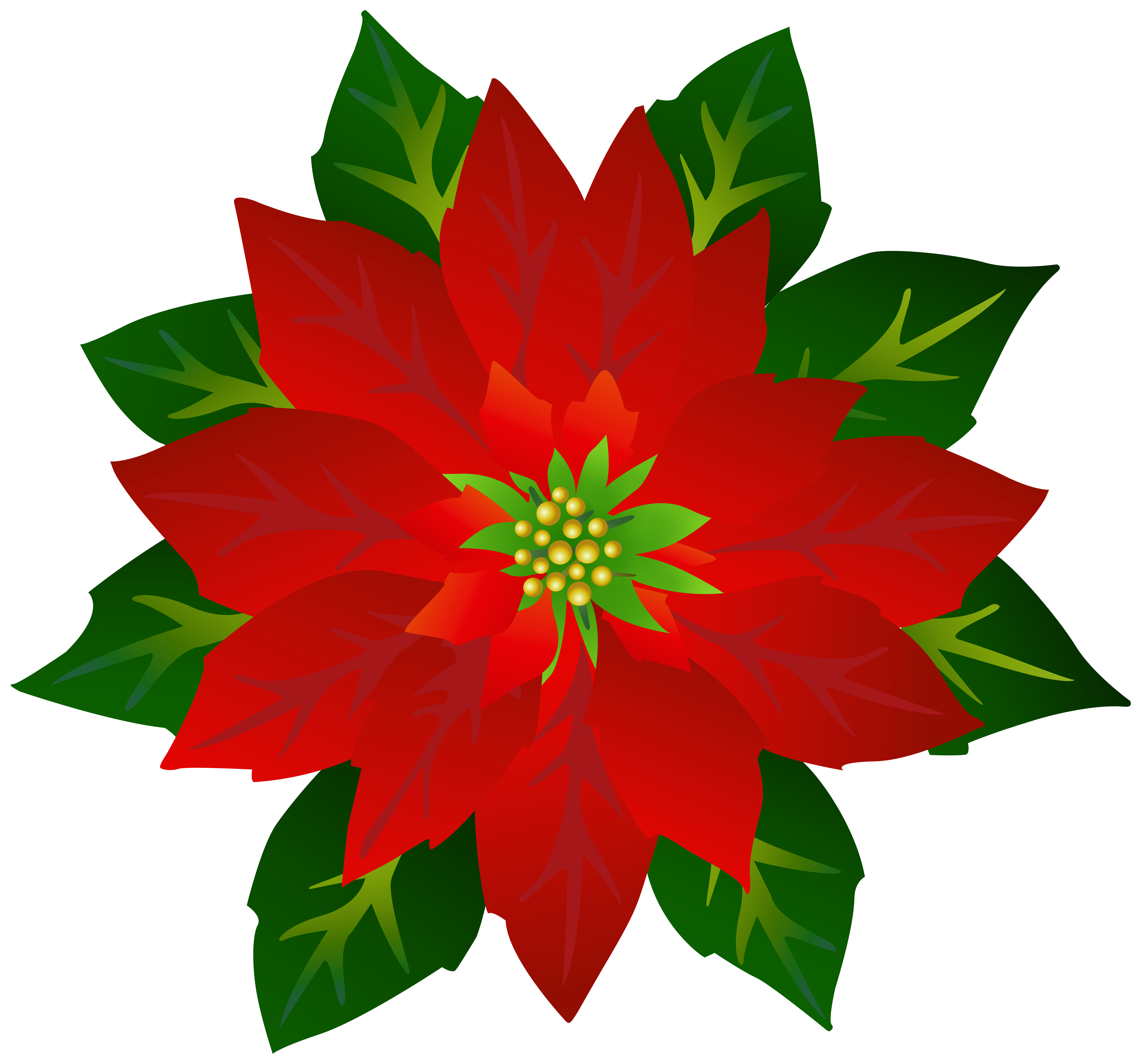 Poinsettia PNG Clipart.