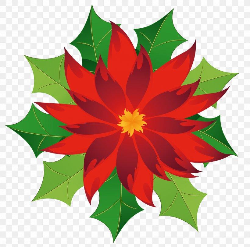Poinsettia Clip Art, PNG, 1807x1788px, Poinsettia, Christmas.