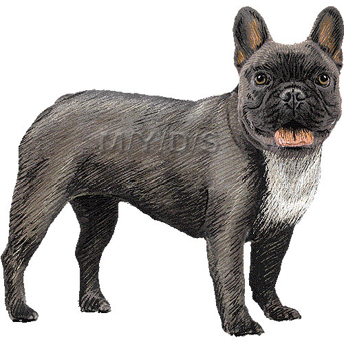 French Bulldog clipart graphics (Free clip art.