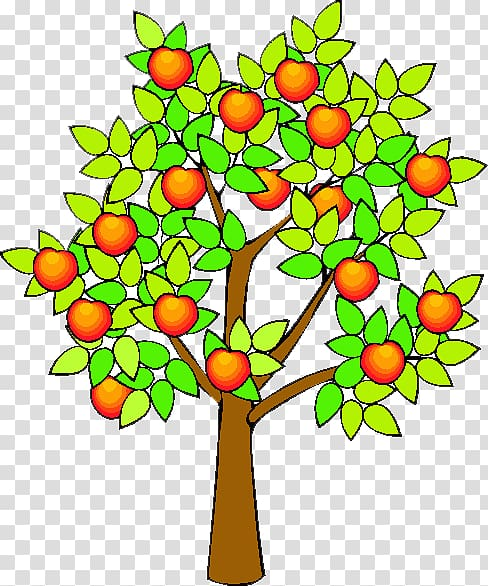 Drawing Apple Fruit tree , orange fruit tree transparent.